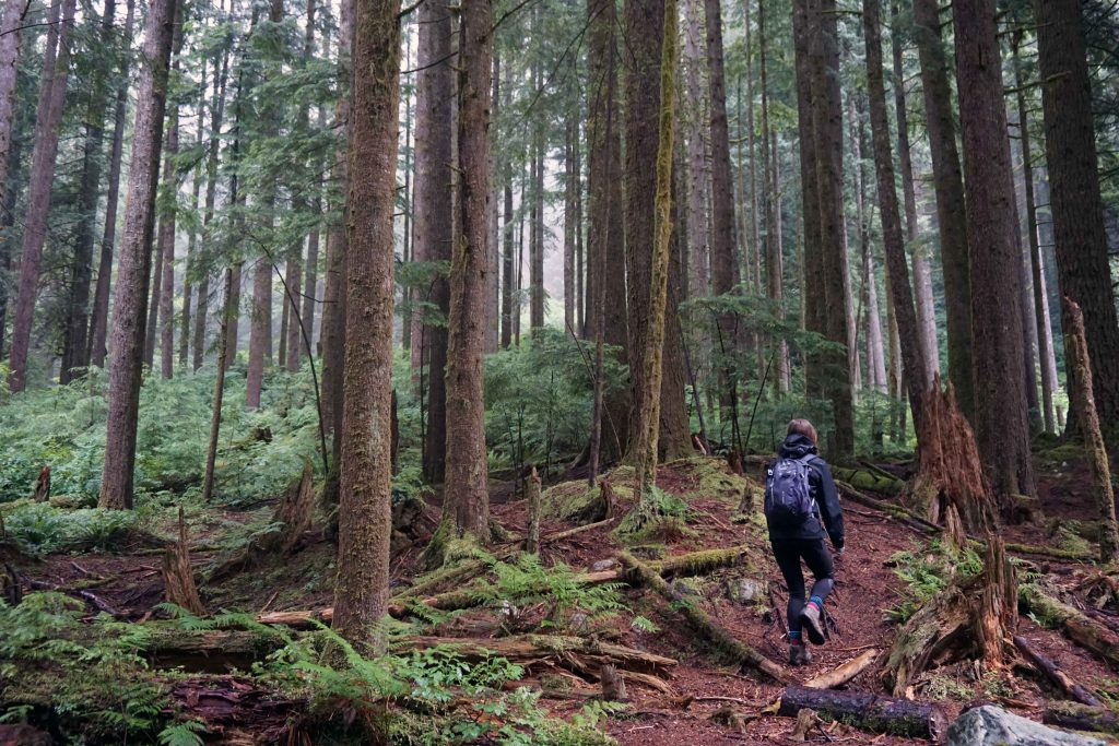 Woman hikes into a forest