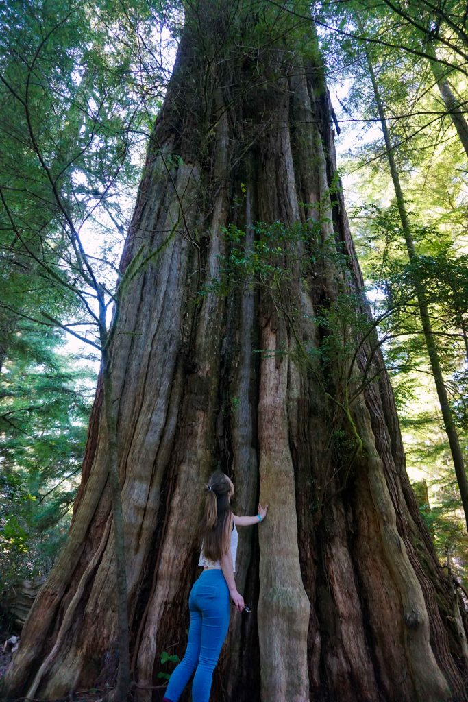 Woman looks up at tall tree