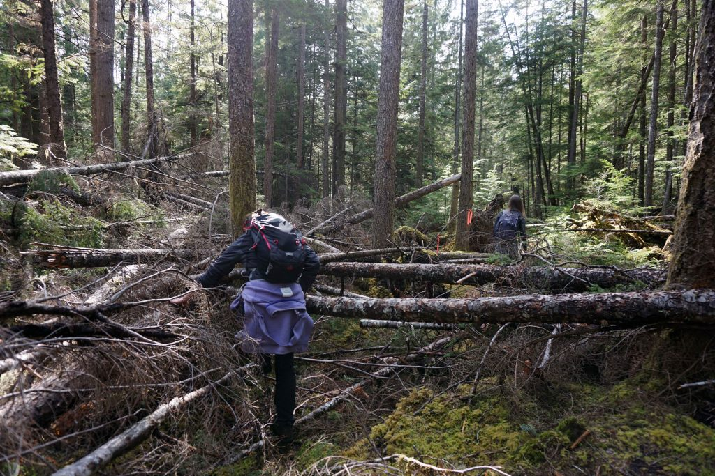 Two women make their way over fallen trees in a forest