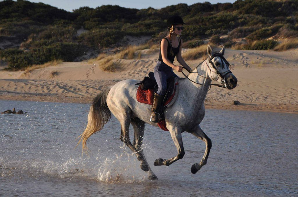 Horse and rider canter through water