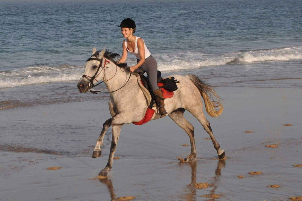 Horse and rider gallop along beach