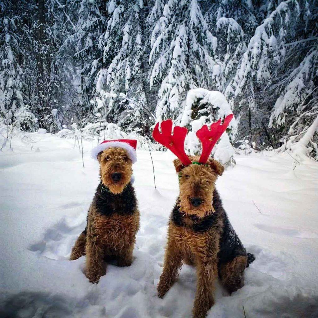 Two dogs sat in the snow wearing santa hats