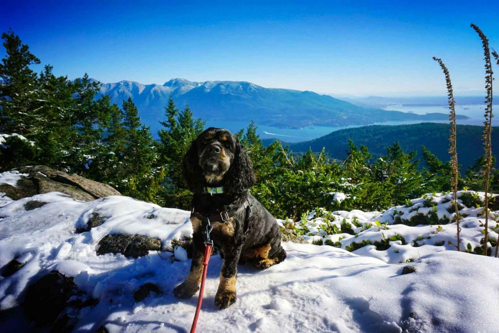 Dog sits on snowy mountaintop
