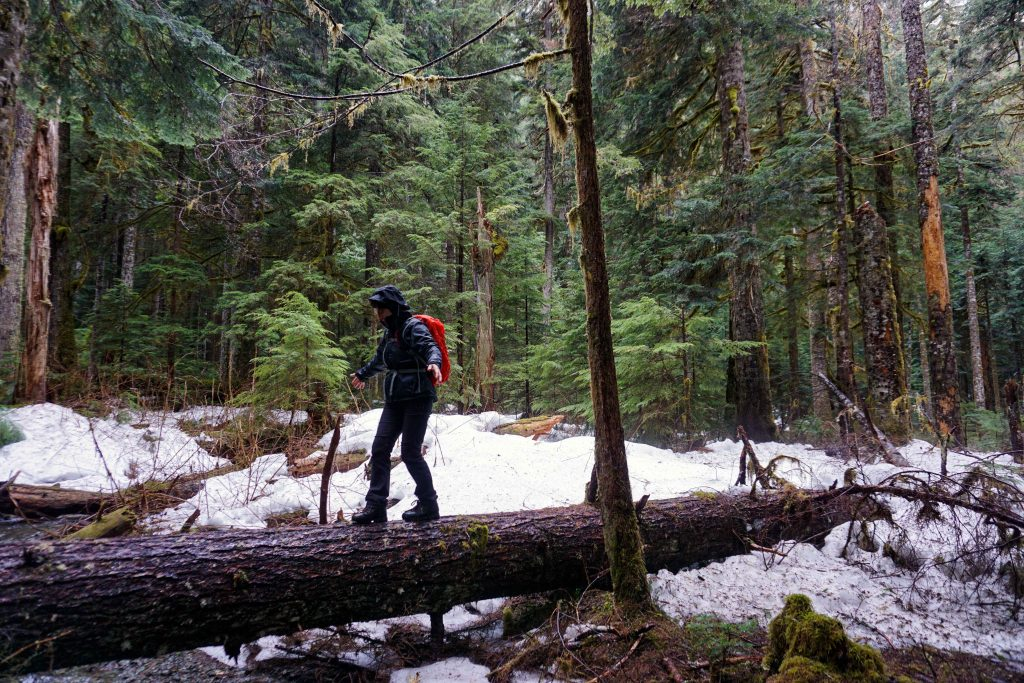 Woman in wet weather hiking gear walks along fallen log in snowy forest